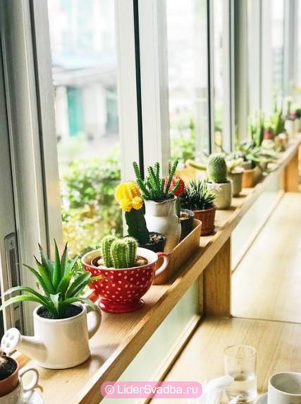 Горшечное растение может стать оригинальным и символичным подарком