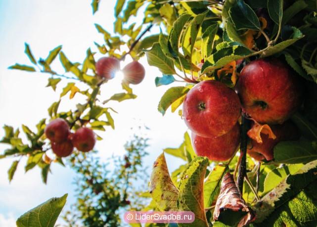 Вместе с поколениями детей и внуков можно посадить фруктовое дерево
