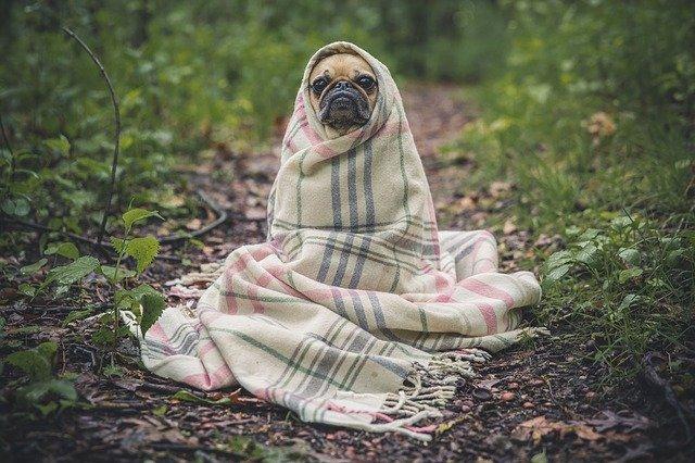 Теплое одеяло, набитое овечьей шерстью